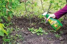 Mittel Gegen Unkraut Im Rasen - unkrautvernichter zum selbermachen schaeferbrueckes