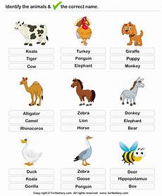 learning animals worksheets 13934 learning farm animals worksheet turtle diary