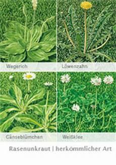 Mittel Gegen Unkraut Im Rasen - unkraut im rasen herk 246 mmliche