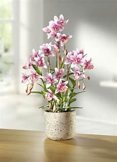 Kunst Orchidee Im Topf - orchidee im topf kunst textilpflanzen brigitte