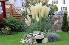 gräser im steingarten 612 best images about ornamental grasses and landscape