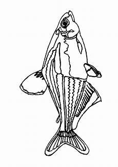 Malvorlagen Tiere Fische Fisch Malvorlagen Malvorlagen Tiere Malvorlagen Fische