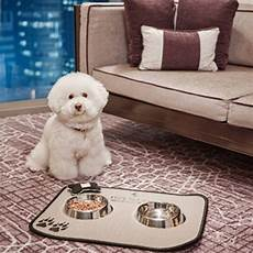 pet friendly hotels in seoul south china morning