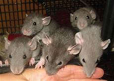 rat supply page 2