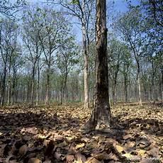Persebaran Flora Dan Fauna Indonesia Azanul Ahyan