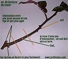 voce di rutali in corsica mai 2011