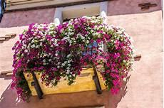 terrazzo in fiore balcone fiorito immagine stock immagine di romantico