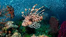 5 Tempat Wisata Di Wakatobi Sulawesi Tenggara