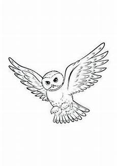 Eule Hedwig Malvorlage Harry Potter 24 Ausmalbilder F 252 R Kinder Malvorlagen Zum