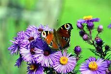 free picture insect summer flower butterfly flora