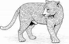 Ausmalbilder Erwachsene Leopard Jaguar Coloring Pages To And Print For Free