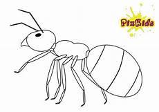 Insekten Ausmalbilder Kostenlos Ausmalbilder Kostenlos Insekten Ausmalbilder