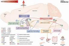 transaminases élevées causes alanine aminotransferase screenings health secrets and tips
