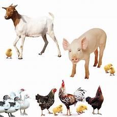 donate farm animals world vision