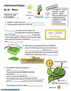 plants and photosynthesis worksheets 13616 worksheet photosynthesis interactive worksheet