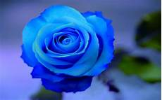 flower wallpaper come blue flowers flower hd wallpapers images pictures