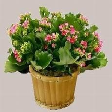 Plante Grasse D Interieur Fleurie Photo De Fleur Une