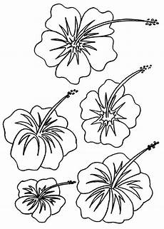 Ausmalbilder Hawaii Blumen Hibiscus Coloring Pages Flower Coloring Pages