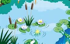 Pflanzen Am Teich Klassewasser De Der Teich Kinder