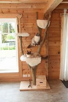 Kratzbaum Selber Bauen Natur - image result for kratzbaum selbstgemacht katzen
