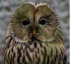 Burung Hantu Comel Gambar Unduh Gratis Imej 100226844