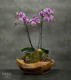 orchideen deko ideen diy orchideen effektvoll dekorieren deko kitchen