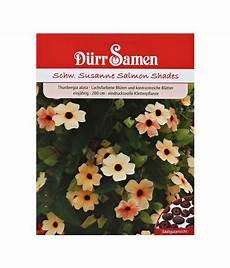 Schwarzäugige Susanne Säen - d 252 rr samen schwarz 228 ugige susanne salmon shades dehner