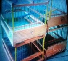 riproduzione cardellini in gabbia gabbie per cardellini posot class