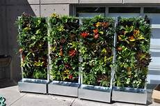 To Plant Vertical Garden by Plants On Walls Vertical Garden Systems