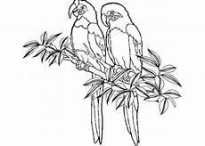 Ausmalbilder Kostenlos Zum Ausdrucken Papageien Papagei Malvorlagen Kostenlos Zum Ausdrucken