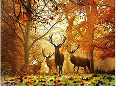 High Definition Photo And Wallpapers: deer wallpapers,deer