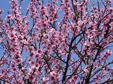 sfondi fiore sfondi per desktop fiori robyroby net
