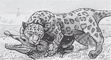 jaguars strong jaws make quick work of most of the jungle a new anatomy zoology thing for
