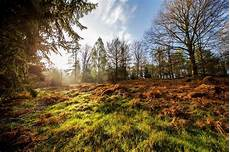 Guten Morgen Natur Foto Bild Wald Sommer Outdoor