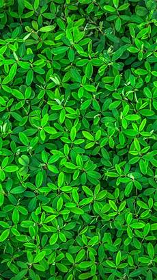 iphone wallpaper green 30 best iphone 6 6s 7 hd wallpapers backgrounds for
