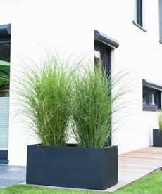 Gräser Im Kübel Als Sichtschutz - sichtschutz ideen 5 kreative f 252 r deinen balkon ideen