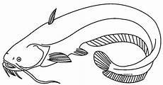 Gambar Mewarnai Ikan Lele Untuk Anak Anak Contoh Anak Paud
