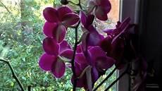 wie pflegt orchideen orchideen bew 228 ssern pflanzen richtig pflegen und gie 223 en