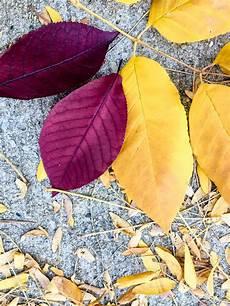 color inspiration fall leaves merriment design