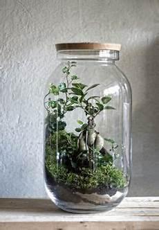 die 105 besten bilder pflanze im glas pflanze im