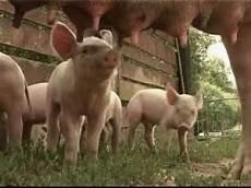 animaux de la ferme deoditoo les animaux de la ferme