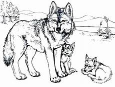 Wolf Malvorlagen Gratis The Best Free Wolf Drawing Coloring Page Images