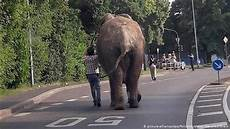 Malvorlagen Elefant Neuwied فيل يفاجئ سكان مدينة ألمانية بتجوله بينهم في الشارع عالم