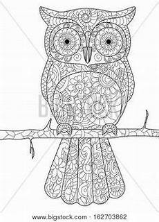 bildergebnis f 252 r zentangle muster eule colouring pages