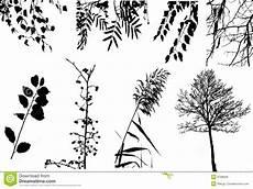 clipart alberi accumulazione clipart di vettore degli alberi e dei