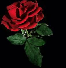 Gambar Bunga Mawar Merah On Itl Cat