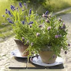 Dekorieren Mit Lavendel - lavendel deko 34 unglaubliche ideen