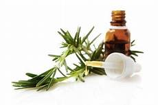 l huile d arbre à thé huile essentielle arbre 224 th 233 un indispensable bienfaits