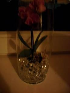 wie oft orchideen gießen orchideen seite 47 allmystery
