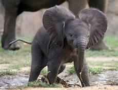 25 cute baby animal pictures amazing creatures